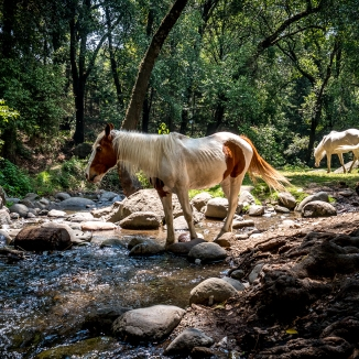Horses drink from the Rio Magdalena and graze on the grass that grows on its banks. As the last living river in Mexico City, the micro climate around the river is rare for the area and represents the necessity of water in sustaining life.